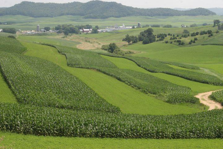 IMG_9714 strip crop landscape